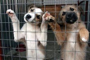 Готовится постановление о защите животных и создании приютов