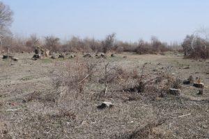 Что происходит сЗарафшанским природным парком